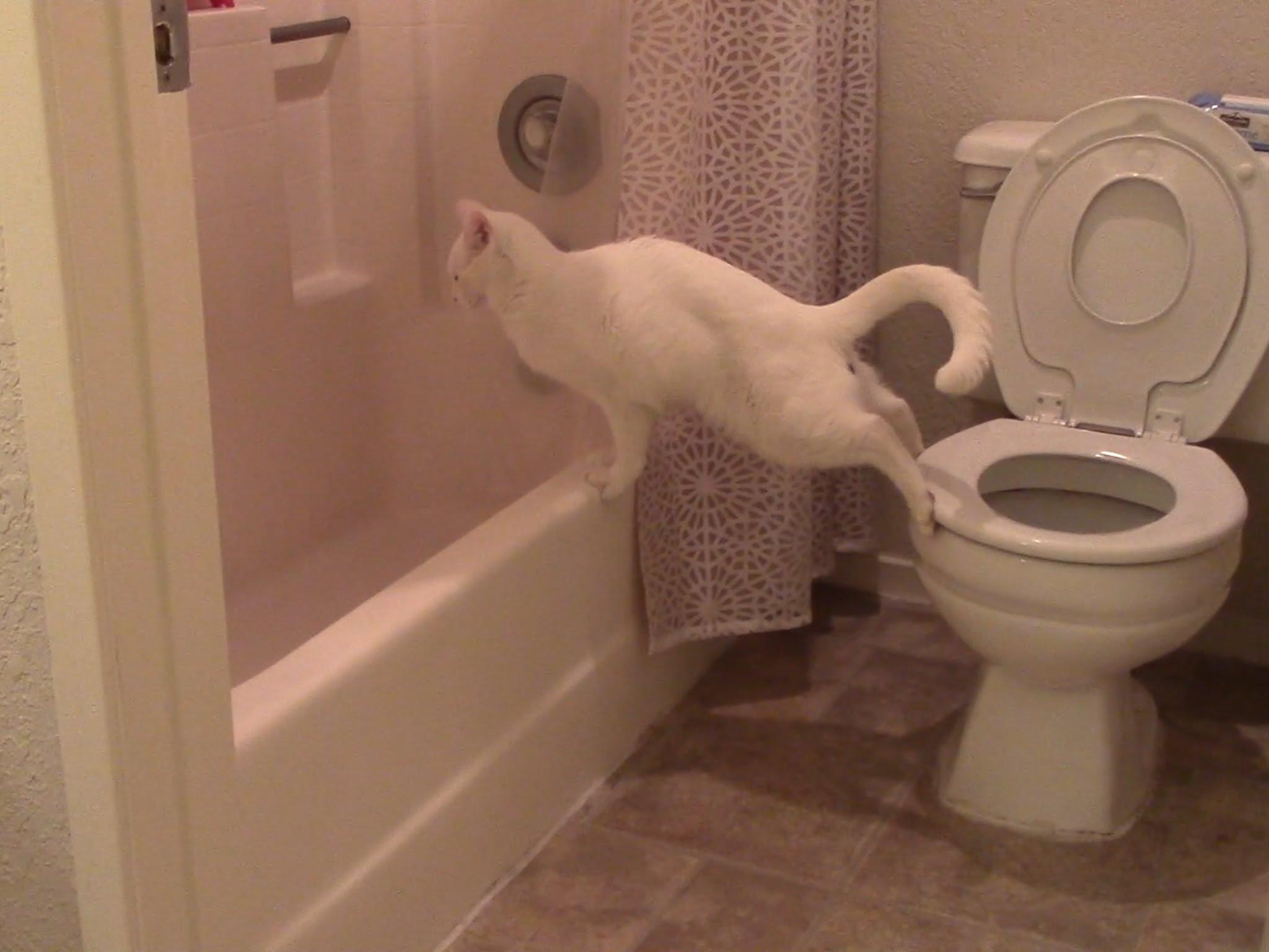 Прийшла к другу в туалет 10 фотография